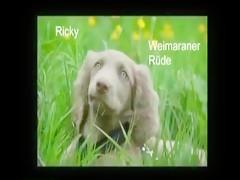 Busty Brunette Babe tiny dog