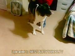 Amamantando al cachorro
