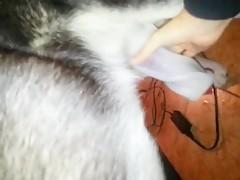 Lesbian Animalpass