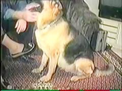 Doggy style dog fuck