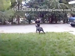 dog lick beatiful teen pussy