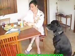 El perro se come el desayuno
