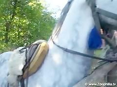 Doctor visit horse