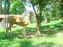 El caballo de la pradera me lo follo
