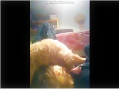 Se la chupa a su perro pequeño